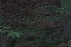 IMG_0521-scaled